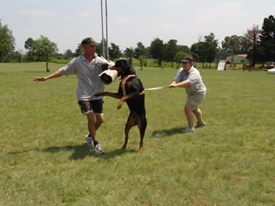 Protection Dog Trainer