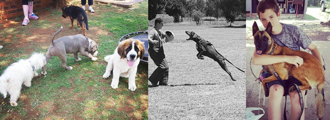 Dog Training College and Kennels   SA Dog Trainers   Dog Trainers