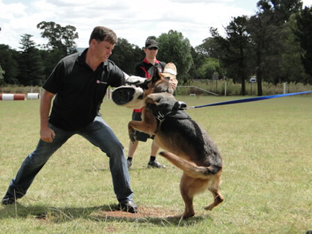 Dog Trainer Classes Level 1