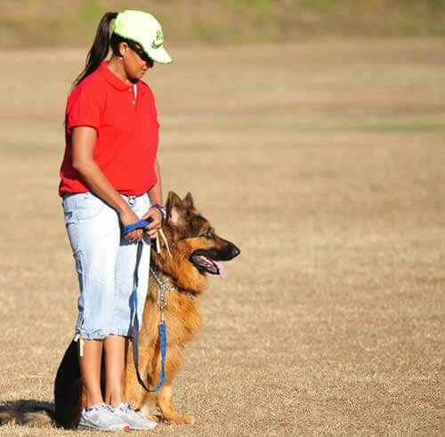 Dog Training Instructor Classes | Dog Trainer Classes - SA