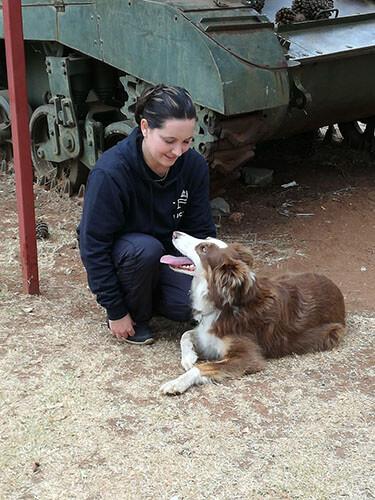 Dog Agility Training Germiston