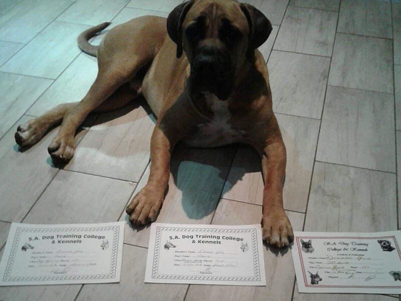 Dog Training Henley on Klip