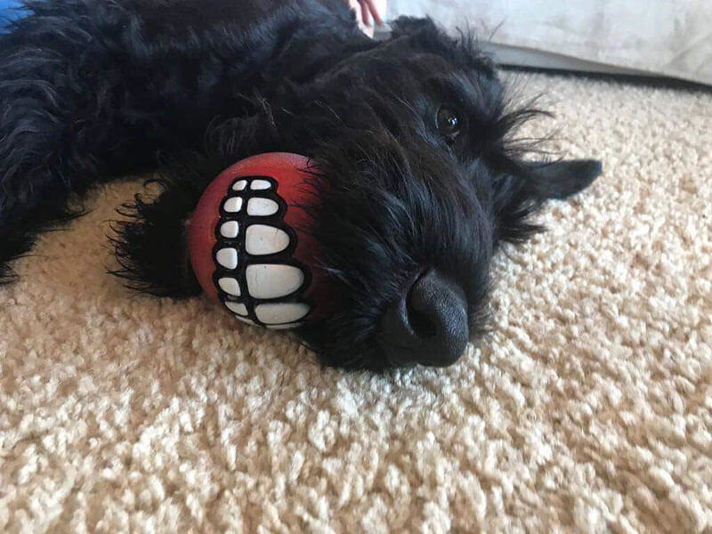 Dog Training Roodepoort