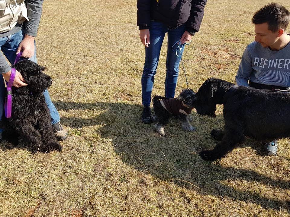Puppy Training Alberton