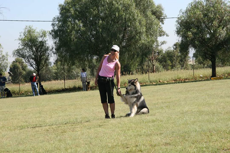 Dog Training Alberton