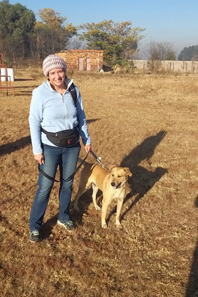 Dog Training Meredale