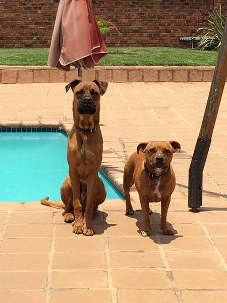 Dog Training Germiston